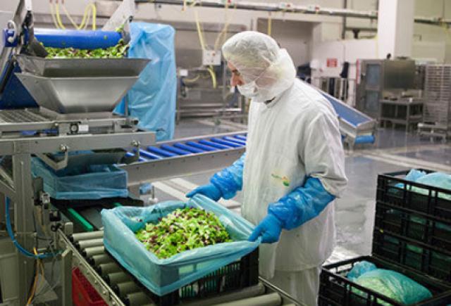 Работа в Германии: овощной склад, 11.3 евро в час нетто. - 1