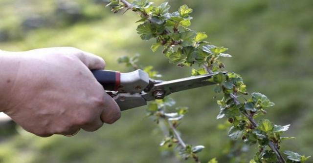 Ищу работу  садовником, хаусмастером - 1