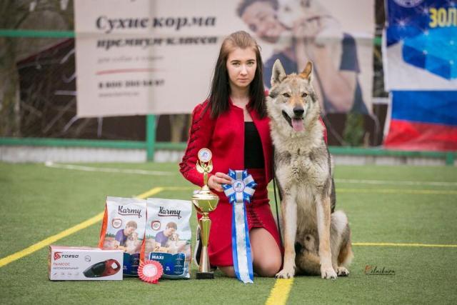 Чехословацкая волчья собака. Щенки. - 2