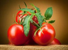 помидор - Изображение 2