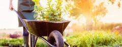 Ищу работу садовника