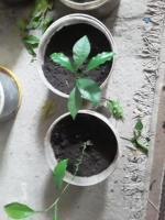 Fruit plants - Изображение 1