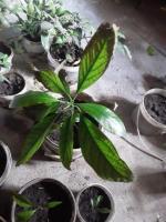 Fruit plants - Изображение 2