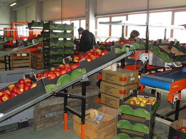 Требуются разнорабочие на упаковке и сортировке фруктов - 1