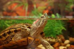 Продам комплект оборудования для рыб или черепах в Македонии - Изображение 2