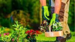Ищем садовника универсала, умелые руки Контактное лицо: Майя