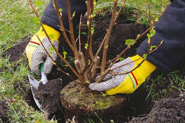 Предлагаем работу на садовом предприятии в Чехии - 1