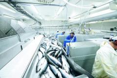 Ищу  работу в качестве разнорабочего  на рыбном заводе  в Норвегии