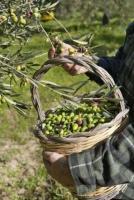 требуются рабочие на оливковые поля в Португалии - Изображение 2