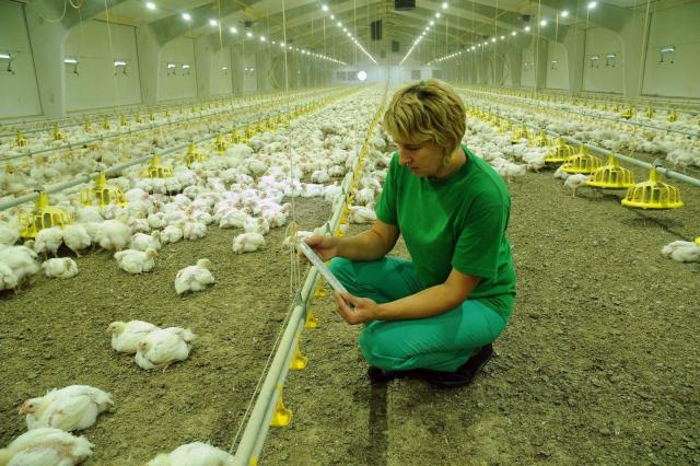 Требуются рабочие на птицефабрику в Литве - 1