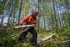 Требуются помощники вальщика леса в Литве