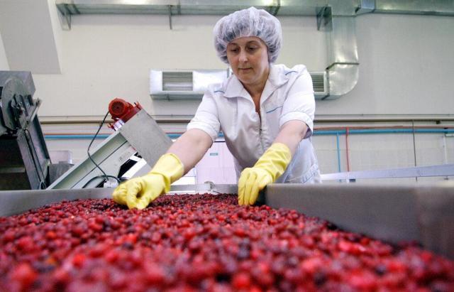 Требуются переработчики фруктового сырья в Норвегии - 1