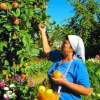 требуются  сборщики яблок в Финляндию