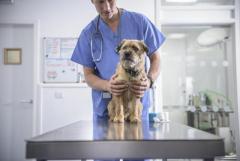 Требуется ветеринарный врач на  Кипр