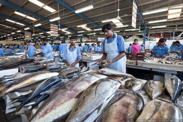 Требуются разнорабочий на переработку морепродуктов в Норвегии - 1