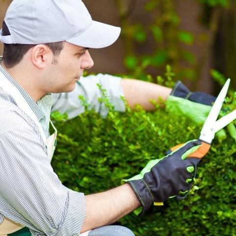 Ищу работу садовника - 1