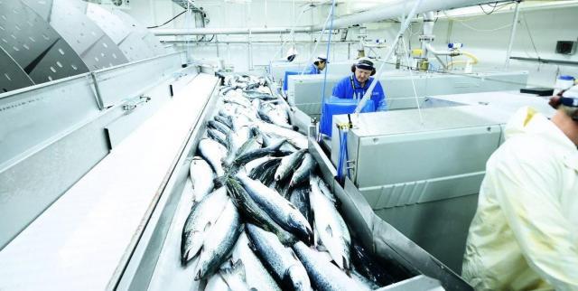 Ищу работу на рыбном заводе в Норвегии - 1