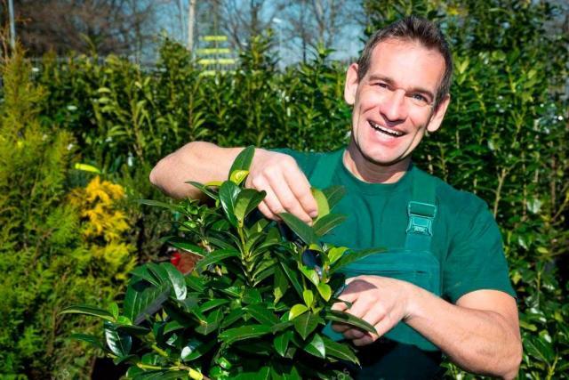 Требуются садовники и Handyman - 1