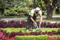 Ищу работу садовником