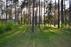 Продам бывший пионерский лагерь - Изображение 3
