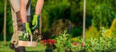 Ищу садовника