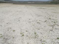 Продается земельный участок СНТ - Изображение 4