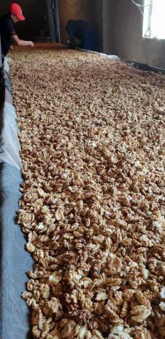 Продам грецкие орехи оптом бабочка половинка - 1