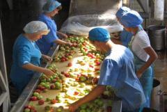 требуются рабочие на сортировку овощей на складе