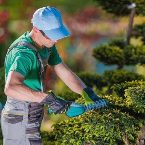 требуется опытный садовник в Данию - 1