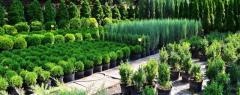 Требуется работник питомника растений
