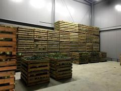 Продается овощехранилище - Изображение 4